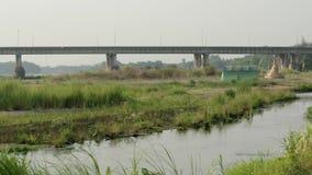 Vista del fiume con erba archivi video