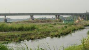 Vista del fiume con erba video d archivio