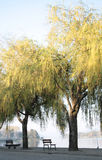 Vista del fiume con l'albero di salice Fotografia Stock