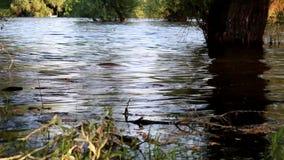Vista del fiume con le onde naturali e la riflessione stock footage