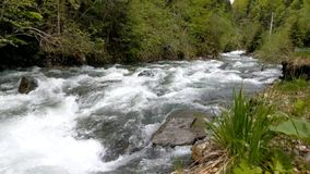 Vista del fiume della montagna che scorre lungo la foresta e la strada video d archivio