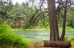 Vista del fiume di Deschutes Immagine Stock