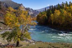 Vista del fiume di Katun, Repubblica di Altai, Russia nave Fotografia Stock