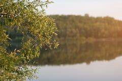 Vista del fiume di mattina dall'erba Fotografia Stock Libera da Diritti