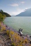 Vista del fiume di Squamish in Columbia Britannica Fotografia Stock Libera da Diritti