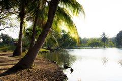 Vista del fiume e della noce di cocco Fotografia Stock Libera da Diritti