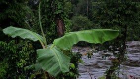 Vista del fiume tramite una foglia della banana L'Africa tropicale, Guinea Equatoriale stock footage