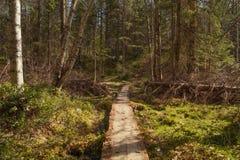 Vista del fondo della natura con il sentiero per pedoni Fotografie Stock