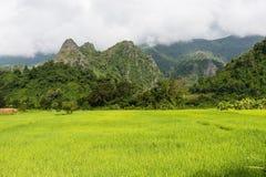 Vista del fondo verde della montagna della risaia nella pioggia della stagione a Fotografia Stock