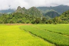 Vista del fondo verde della montagna della risaia nella pioggia della stagione a Fotografie Stock