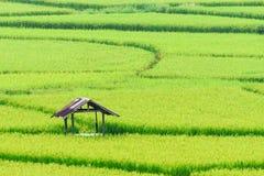 Vista del fondo verde della risaia nella pioggia della stagione a Nan Pro Immagine Stock Libera da Diritti