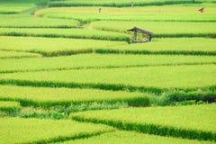 Vista del fondo verde della risaia nella pioggia della stagione a Nan Pro Fotografie Stock