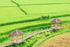 Vista del fondo verde della risaia nella pioggia della stagione a Nan Pro Fotografia Stock Libera da Diritti