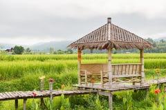 Vista del fondo verde della risaia nella pioggia della stagione a Nan Pro Immagine Stock