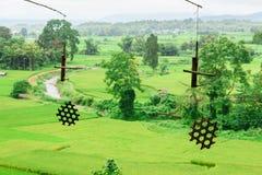Vista del fondo verde della risaia nella pioggia della stagione a Nan Pro Fotografia Stock