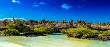 Vista del Galapagos Immagini Stock