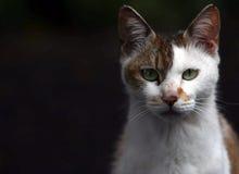 Vista del gato Fotos de archivo libres de regalías