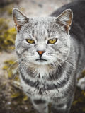 Vista del gato Foto de archivo