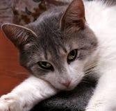 Vista del gatto fotografia stock libera da diritti