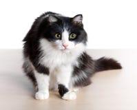 Vista del gatto Fotografie Stock Libere da Diritti