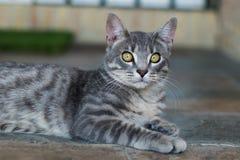 Vista del gatto Immagini Stock