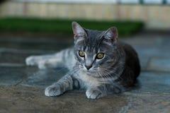 Vista del gatto Immagini Stock Libere da Diritti