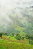 Vista del giacimento del riso sulla montagna Immagine Stock Libera da Diritti
