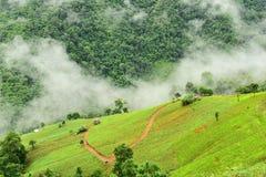 Vista del giacimento del riso sulla montagna Immagini Stock Libere da Diritti