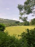 Vista del giacimento e delle montagne del riso fotografia stock