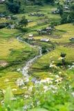 Vista del giacimento del riso con il fiume nel villaggio di Tavan Fotografia Stock Libera da Diritti