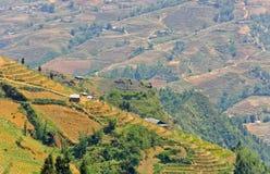 Vista del giacimento a terrazze del riso sulla montagna Fotografia Stock