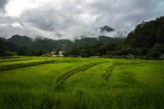 Vista del giacimento a terrazze del riso nel giorno nuvoloso a Mae Klang Luang in Chiang Mai, Tailandia fotografia stock