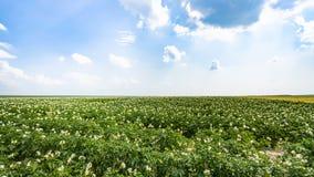 vista del giacimento verde della patata in Francia Immagine Stock Libera da Diritti