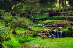 Vista del giardino Immagini Stock Libere da Diritti