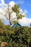 Vista del giardino Immagini Stock