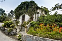 Vista del giardino botanico di Batumi Fotografia Stock