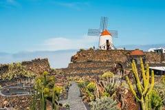 Vista del giardino del cactus con il mulino a vento bianco in Guatiza, attrazione popolare a Lanzarote, isole Canarie Fotografie Stock Libere da Diritti