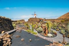 Vista del giardino del cactus con il mulino a vento bianco in Guatiza, attrazione popolare a Lanzarote, isole Canarie Immagine Stock