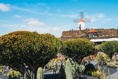 Vista del giardino del cactus con il mulino a vento bianco in Guatiza, attrazione popolare a Lanzarote, isole Canarie Fotografia Stock Libera da Diritti