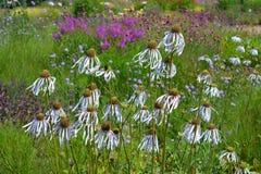 Vista del giardino, coneflowers e aiole variopinte e confini in primavera immagine stock libera da diritti