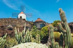 Vista del giardino del cactus con il mulino a vento bianco in Guatiza, attrazione popolare a Lanzarote Fotografia Stock