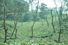 Vista del giardino di tè fotografie stock