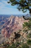Vista del grande canyon Fotografie Stock Libere da Diritti