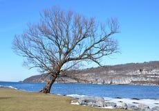 Vista del invierno con el árbol solitario silueteado en el lago helado foto de archivo