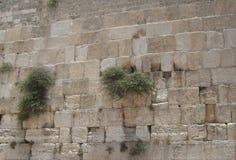 Mujeres occidentales de la pared laterales Fotografía de archivo
