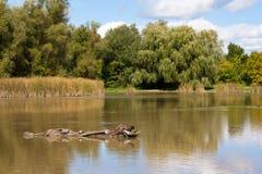 Vista del lago autumn nel Canada fotografia stock