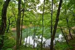 Vista del lago azul a través de los árboles de Baia Fotos de archivo