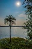 Vista del lago, con il Sun, l'albero, il lago e l'uccello di volo Fotografie Stock Libere da Diritti