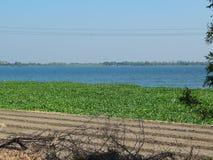 Vista del lago con la foglia verde del fiore fotografia stock libera da diritti