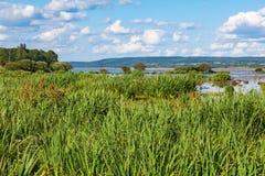 Vista del lago con le canne Fotografie Stock Libere da Diritti